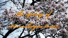 久万高原の四季の動画ご紹介